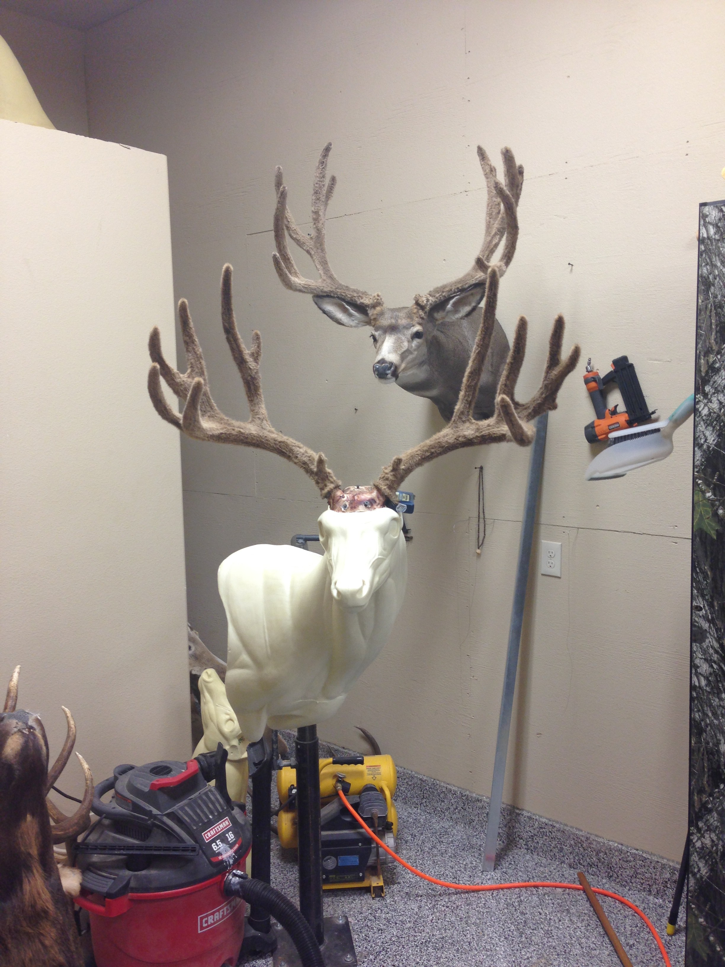Antler and Horn placement is a crucial step in setting your big game mount